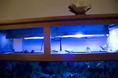 Aquarium Canopy Lights Lighting Question For Aquarium With Canopy Reef Sanctuary
