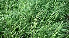 Fescue Hay Hay Quality Is Improved By Understanding How It Dries