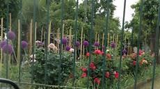 fiori a palla viola fiori a palla viola