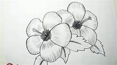 Picture Drawing How To Draw Hibiscus Flowers Pencil Drawing Shading
