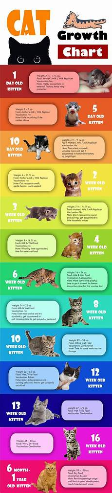 Average Cat Weight Chart Cat Growth Chart Infographic Best Infographics