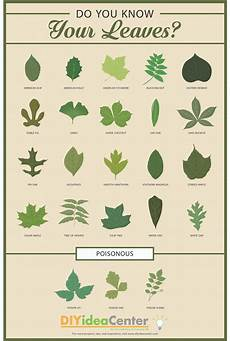 Tree Leaves Chart Leaf Identification Guide Diyideacenter Com