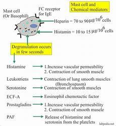Hypersensitivity Reaction Anaphylactic Reaction Type 1 Hypersensitivity Reaction