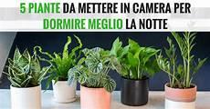 piante per da letto metti una di queste 5 piante in per dormire meglio