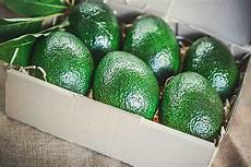 Different Types Of Avocado Avocado Varieties Barham Avocados