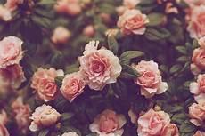 aesthetic flower desktop wallpaper backgrounds vintage flowers peaceful in 2019