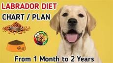 Labrador Puppy Food Chart India Labrador Diet Chart Labrador Puppy Diet Plan In Hindi