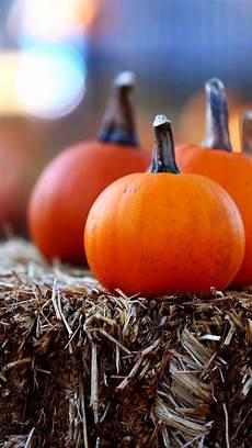 pumpkin iphone wallpaper 166 best iphone autumn wallpapers images on