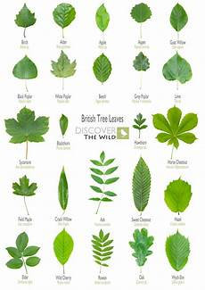 Tree Leaves Chart British Tree Leaves Sheet