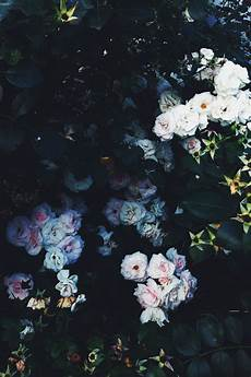 Aesthetic Flower Wallpaper Iphone by By Elizabeth Lazdina Aesthetic Nature Aesthetic