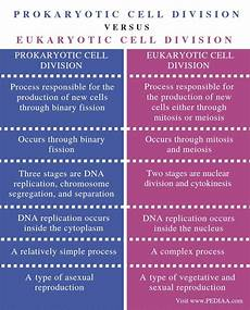 Difference Between Prokaryotic And Eukaryotic What Is The Difference Between Prokaryotic And Eukaryotic