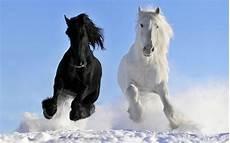 winter foto mit pferde im schnee hd hintergrundbilder