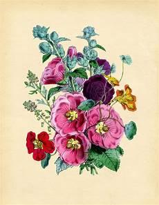 Flower Printable Vintage Instant Art Printable Hollyhocks The Graphics
