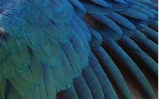 iphone blue feather wallpaper blue feather hd wallpaper wallpaper flare