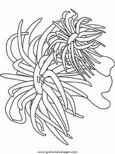 Malvorlagen Unterwasserwelt Pflanzen Malvorlagen Unterwasserpflanzen Coloring And Malvorlagan