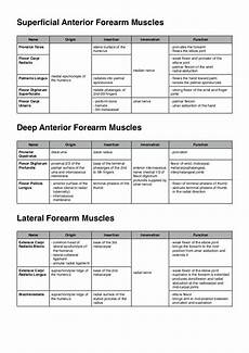 Muscle Origin And Chart Pdf Muscles Of The Upper Limb Physical Therapy Student