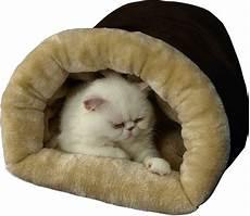 armarkat burrow cat bed mocha beige chewy