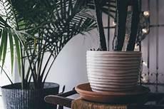 zimmerpflanzen luftreiniger luftreinigung durch pflanzen nat 252 rlich gute luft 187 top