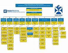My Duke Chart Org Organizational Chart Duke Global Neurosurgery And