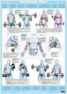 Weight Training Exercises Chart Biceps Exercises Weight Training Chart Chartex Ltd