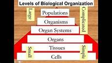 Levels Of Organization Levels Of Biological Organization Youtube