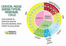 24 Day Menstrual Cycle Chart Normal Ovulation Day Menstrual Cycle What S Normal What