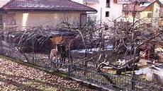 allevamenti animali da cortile animali da cortile