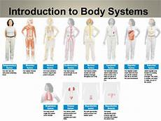 11 Body Systems Introduction To Human Body Systems