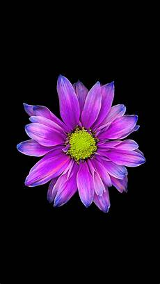 Purple Flower Wallpaper Iphone 6 by Be Linspired Free Iphone 6 Wallpaper Backgrounds