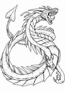 Ausmalbilder Drachen Drachen Ausmalbilder 100 Schwarz Wei 223 Bilder Kostenlos