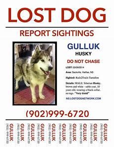 Lost Dog Poster Maker Lost Dog Poster Sackville Halifax Co Ns Husky