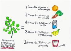 Moringa Chart Benefits Of Moringa Chart Google Search Moringa So