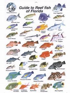 Florida Fish Id Chart Waterproof Fish Identification Card Florida Fish Id Card