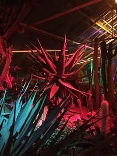 Mis Light Show Buffalo S Garden Light Show Is A New York Attraction You