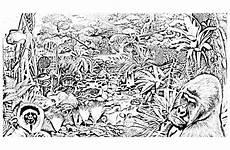 Ausmalbilder Erwachsene Wald Dschungel Wald 95500 Dschungel Wald Malbuch Fur