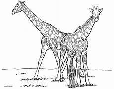 Ausmalbilder Drucken Giraffe Print Giraffe Coloring Pages For To