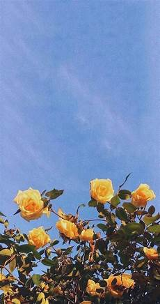 Aesthetic Flower Wallpaper Iphone by Pin By Zohaila On Aesthetic Aesthetic Iphone Wallpaper