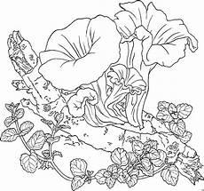 pflanzen im wald ausmalbild malvorlage blumen