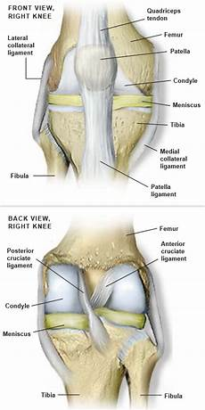 Right Knee Anatomy Anatomy Of The Knee Central Coast Orthopedic Medical Group