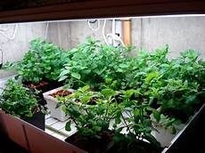 Basil Grow Light How To Grow Herbs Indoors Herb Gardening Guide