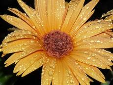 Yellow Flower Wallpaper by Yellow Flower Hd Image Hd Wallpapers