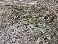 Fescue Hay White House Farms 4x5 Fescue Cow Hay From The Barn