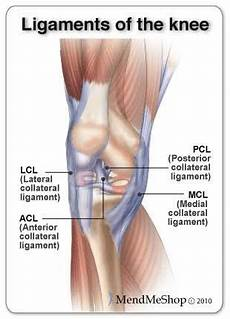 Knees Ligaments And Tendons Image Result For Ligaments And Tendons Of The Knee Knee
