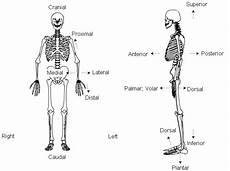 Anatomic Chart Planes And Motions Used In Macroscopic Anatomy