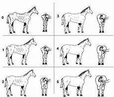 Healthy Horse Weight Chart How To Tell If A Horse Is The Correct Weight 187 Any