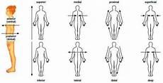 Anatomic Chart 2 Anatomical Planes Amp Directions Anatomy