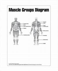 Blank Body Chart Muscle Chart 7 Free Pdf Documents Download Free