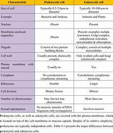 Difference Between Prokaryotic And Eukaryotic 1 Principal Differences Between Prokaryotic Cells And