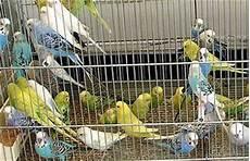 fiera animali da cortile roncade 48 170 fiera dei osei mostra mercato animali domenica