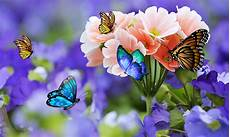 flower phone live wallpaper live wallpapers 15 beautiful collections